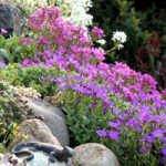 roślinki na skalniaku